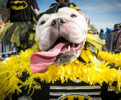 Dug Up at Dogster: March 2020 Dog Events and Premieres
