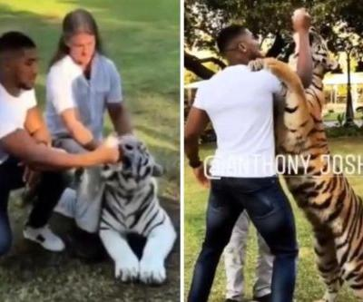 Anthony Joshua finally meets his match as he gets manhandled by massive tiger on holiday in Dubai