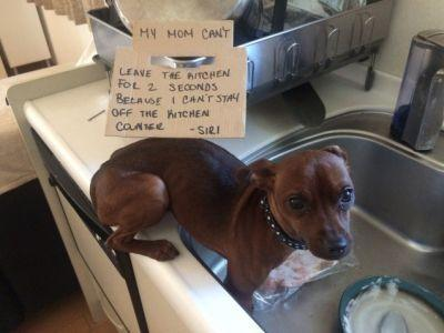 For Hire: Underpaid Dishwasher