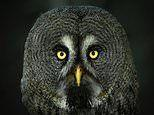 The stunning finalists in Agora's 'best photo of eyes' contest