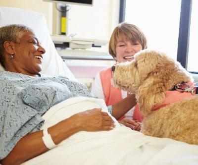Emotional Support Dogs - What to Know About Certification, Public Access and How to Get One