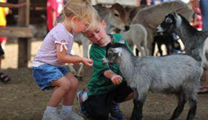 Yet Another Petting Zoo E. coli Outbreak?