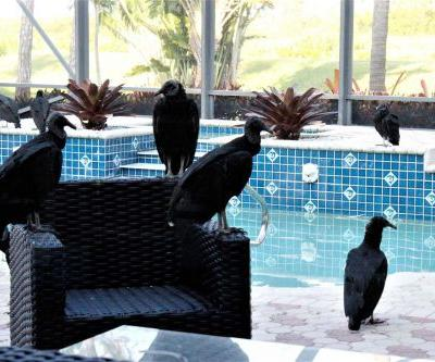 'You can't make this up': Vultures damage homes as they descend upon Florida neighborhood
