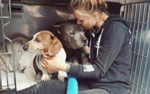These Bonded Dogs Were Heartlessly Separated After Adoption, But Their Story Isn't Over