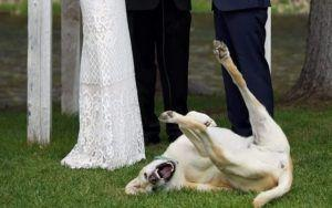 Canine Best Man Steals The Show During His Parents' Wedding Vows