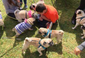 "Boy With Autism Gets ""Pug-tastic"" Birthday Surprise Thanks To Kind Strangers"