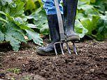 Now doctors prescribe ALLOTMENTS to help with loneliness or muscle and joint pain