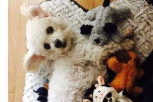 Rescued Mother Dog Loses Her Babies And Adopts Stuffed Animals To Mend Her Broken Heart