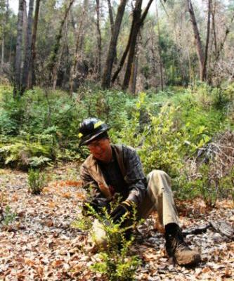 Fire and Agroforestry Are Reviving Traditional Native Foods and Communities