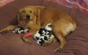 Rescued Mama Dog Gives Birth To A Litter Of. Cows?