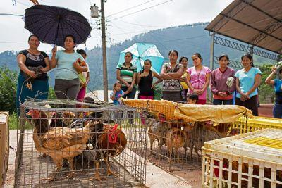 10 Hens and Hope in Chiapas