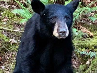 Black bear cub killed after becoming too friendly with humans