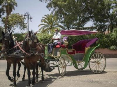 Morocco's carriage horses and donkeys face risk of starvation as tourism collapses due to coronavirus