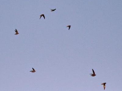 Chimney Swift Challenge 2014 - We have a winner!