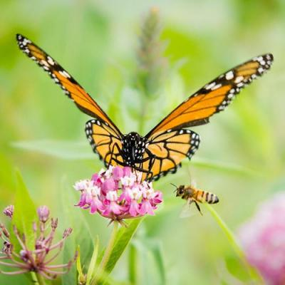 A Jot from Jane: For the Love of Monarchs