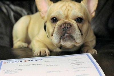 What Are the Differences Between the AKC, CKC and UKC Breed Registries?