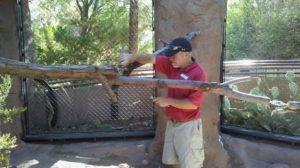 New Dynamic 'Branch' Program Started at the Phoenix Zoo