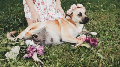 This Dog Had A Dreamier Maternity Shoot Than Most Humans