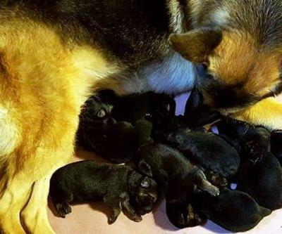 Let's Talk About Professional and Responsible Dog Breeding