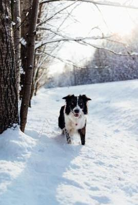 5 Ways to Prepare Your Dog for Winter
