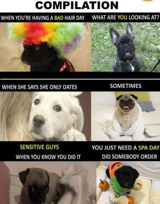Try Not to Laugh at this Funny Dog Meme Compilation Video