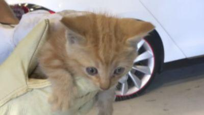 Tiny Meows From Inside Man's Tesla Reveal Most Adorable Stowaway