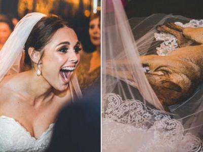 Stray Dog Crashes A Wedding And Finds His Own Happily Ever After