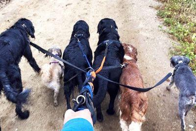 When Should You Hire a Dog Walker and How Do You Find the Right One?