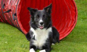 The Trendy New Kind of Dog Treat Collies Go Nuts For