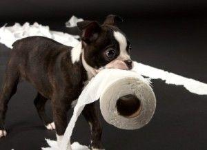 Puppy Diarrhea: Key Causes, Remedies and Prevention