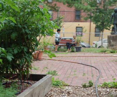 The Artist Creating Urban Farms to Feed Philadelphia