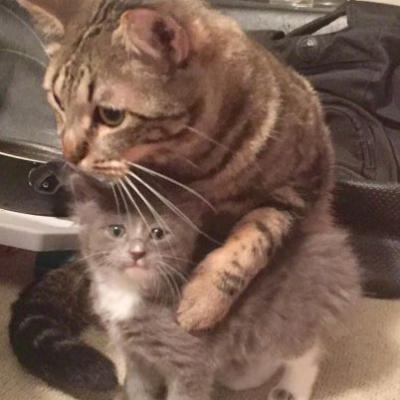 Rescue Cat Teaches His New Kitten Brother How To Cuddle