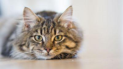 Severe PMS has been linked to a parasite carried by cats