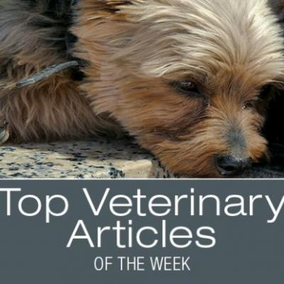 Top Veterinary Articles of the Week: Kennel Cough, Circovirus, and more