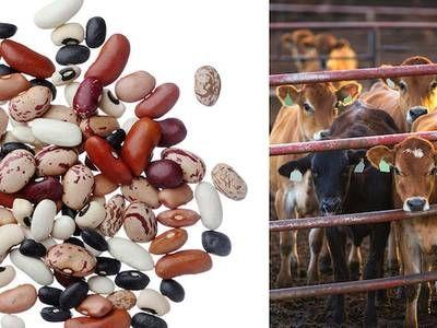 Trading beans for beef would dramatically slash greenhouse gasses