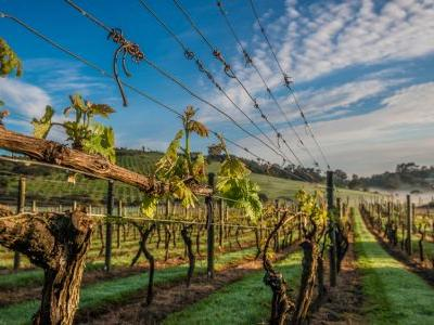 The Ultimate Guide to New Zealand Wine