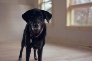 5 Disaster Preparedness Tips For Dog Owners