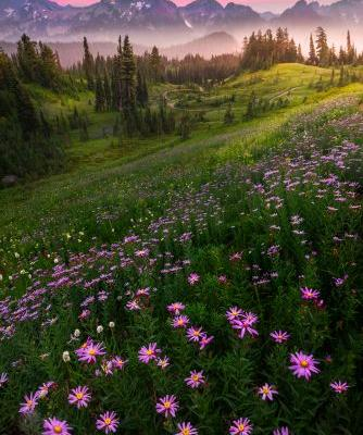 Top Ten Tips For Successful Wildflower Photography