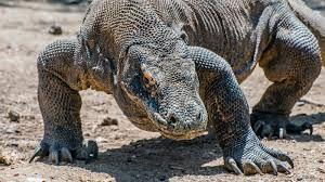 Komodo Island will be closing its doors in Jan 2020 for a revamping process