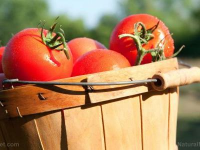 Tomato extracts KILL stomach cancer cells, new study shows