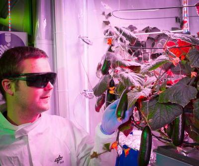 Antarctica is getting a farm that can grow produce even when it's -100 degrees Fahrenheit outside - take a look
