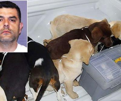 Vet who turned puppies into drug mules gets 6 years in prison