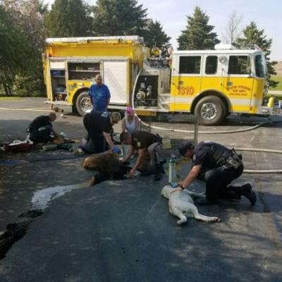 First responders help 7 dogs from fire in Indiana