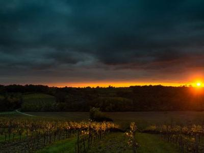 Virginia Winery Loses Nearly Entire Grape Harvest in Overnight Heist