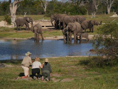 Wildland Adventures' New Zimbabwe Conservation Safari Showcases How Tourism Can Assist Environment