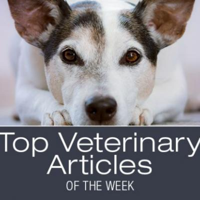 Top Veterinary Articles of the Week: Polyphagia, Puppy Strangles, and more