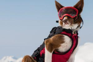 Superpower Dogs Showcases The Hardest Working Canines With Uplifting Documentary
