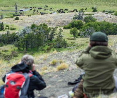 EcoCamp Patagonia's Mini Documentary Takes Viewers On New Wild Horse Tracking Program