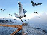 Wings of a seagull 'morph' into a variety of shapes to become more stable