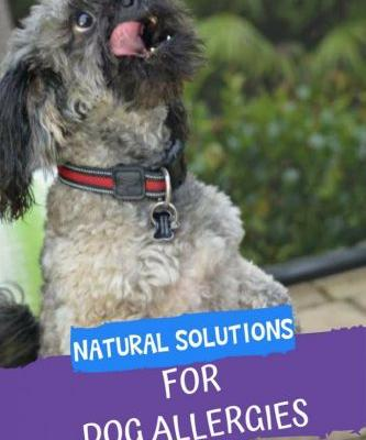 Natural Solutions for Dog Allergies